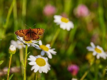 butterfly-3418535_1920