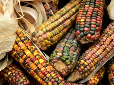 corn-3663086_1920